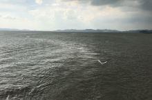 泛太湖,好美的一群白鹭!