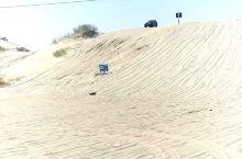 奈曼旗沙漠骆驼