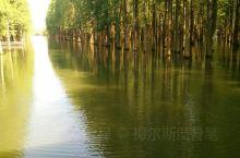 第一次看到长在水中的森林,好像置身童话中的仙境,尤其是踏着水车慢慢穿梭在树从中的,听着悠扬的音乐,真