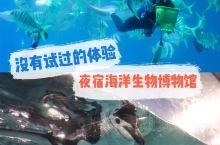【台湾】夜宿海洋生物博物馆绝对没有试过的体验 · 一开始觉得这和夜宿非常有趣,因为介绍写着大大的与鱼