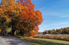 公园实在太大太大!景色优美,不失为假期跑步休闲的好去处。