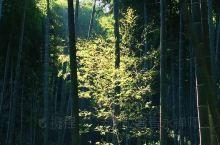 那一抹阳光倾泻在山间竹林,在那个艰难的年月,新四军是不是就在里面等着伏击日本侵略者呢。