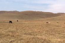 10月国庆节假期,乌兰布统景区骑马深度游。