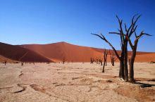 蓝天、红沙、黄土、枯木,一幅凄凉的画卷,一个孤单的非洲… 纳米比亚诺克鲁夫国家公园,这里真的有个名副
