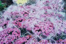 鲜花开遍全世界