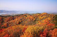 日光山谷的迷人红叶