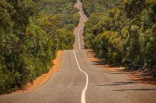 南澳袋鼠岛  停车场就可以发现如此接近的树熊,还是2只哦。  袋鼠大的不敢靠近。  旅行中的景点是必