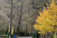 秋季的秦岭