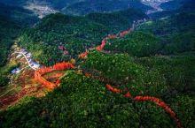 三明龙栖山  龙栖山自然保护区位于福建省三明市将乐县境内,总面积12600公顷,是一个以亚热带常绿阔