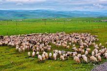 大西北,除美景外,最让我难忘的是只  牛羊肉可以成全的美食太多了,今天冬至,一碗羊汤带来的温暖,足以