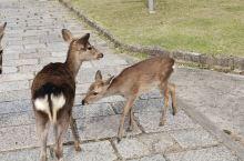 喂小鹿来的
