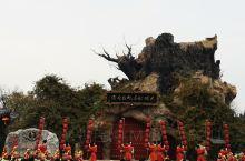 寻根大槐树,家在洪洞县。