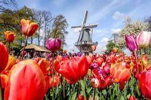 库肯霍夫郁金香花园 郁金香的盛宴  【景点攻略】 详细地址: 阿姆斯特丹和海牙之间,靠近莱顿,高速路