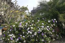 避世之旅,旅行中最好的一站 西双版纳悦椿温泉度假酒店 ,楼下的泳池很漂亮,温泉真的好惊艳,网红打卡的