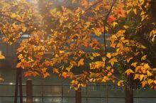 冬日暖阳,无限美好,珍惜眼下。