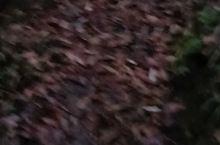 森林公园的早晨,天还不是很亮,顺着山间小路漫步在崇山峻岭之间,山路蜿蜒盘旋,成了这座大巴山中一条亮丽