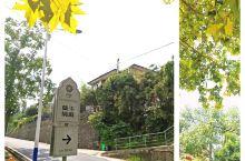 换个角度拥抱莫干山/花筑 境庭 民宿的停车场的路边有一棵巨大的梧桐树,让我想起了南京的梧桐树是孙中山