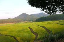 稻花香里说丰年!蓝蓝的天空在几朵白云掩映下愈加深沉,一望无垠的稻田,孕育丰收的喜悦!远山转苍翠,流水