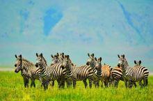 """【坦桑尼亚景点篇】 《恩戈罗恩戈罗火山口》  世界最完美的火山口  1979年被列入""""世界遗产名录"""""""