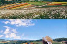 疫情结束后,一起去夏天的北海道看花海吧  2019一年的夏天总算圆满了自己想去看夏天北海道的心愿。