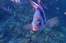 菲律宾巴拉望科隆岛浮潜 其实科隆岛的浮潜最推荐到C线的珊瑚花园浮潜点,回来看别人的游记照片都后悔了,