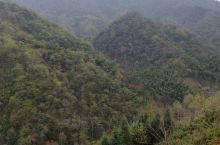 有云有雾高山上的茶叶真好!