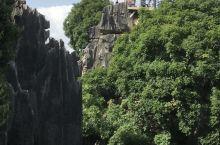 特别的石林景观