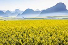 罗平油菜花名弛遐迩,每年自春节前后至三月中,是罗平油菜花开的季节,到罗平观赏油菜花的游人蜂涌不绝。