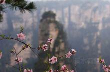张家界《袁家界风光》 春季游览是最惬意之时,翠绿包裹了山峦,花海映出了灿烂。欣赏张家界森林公园此时最