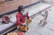 在印度教圣城瓦拉纳希,一个苦行僧开始了自己的耍猴表演。猴子在印度有着很重要的地位,神猴Hanuman