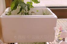 阳台绿植生长,可惜夏天到来,小虫也生长乱飞,怎么解?