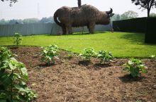 好大的牛 上海辰山植物园