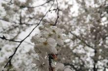 神秘湘西!今年春天来的晚了一点!