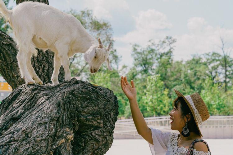 Qinhuangdao Wildlife Park4