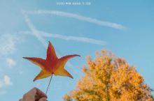 秋天的马德里丽池公园,除了一地金黄的落叶,还有红火的枫叶。水晶宫外的喷泉被蓝色的天空包绕,红色和黄色