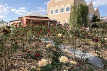 [薔薇園] (玫瑰花園)  位於熊本市中心的一個小公園 秋天的玫瑰花也挺有氣氛 國外觀光除了有名的景