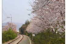 找错地方!以为这里是镇海的一个景点,铁路樱花大道。其实是另外一个地方,要坐车过去。(在长途汽车站等车