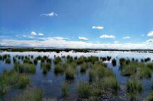 若尔盖花湖,实在太美,再来一发