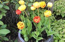 邻居家这盆奇怪的花的十几天变化