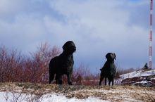 #两只好狗# 你知道哪只是拉布拉多犬?哪只是纽芬兰犬吗?