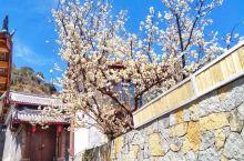 束河古镇 总有人说丽江太商业化,是因为她那么纯净,我们对她有一种完美的要求。 现在束河有满村的花,有