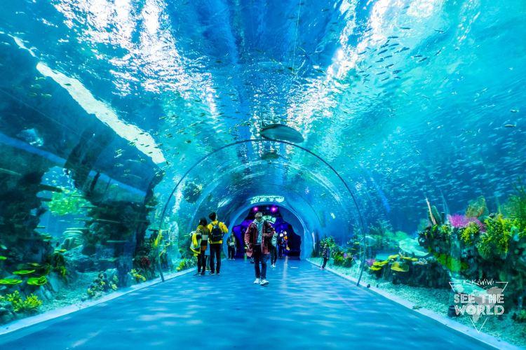 上海海昌海洋公園4