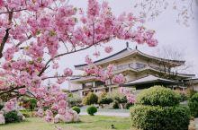 这个季节去西安体验感真的太棒了,阳光正好,微风不燥。去的每一个景区都开满了樱花,在华清宫,大雁塔,青
