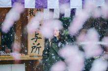 日本赏樱|你见过雪中的樱花吗? 这次的日本追樱之旅,没想到到长野之后,还遇见了一场雪,雪中的樱花,无