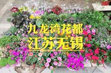 """""""九龙湾花都""""位于江苏省无锡市滨湖区钱胡路,是无锡太湖边最大型最有特色的花卉市场之一,也是""""九龙湾花"""