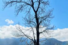 今天给大家分享冶勒湖的旅行安利。 这是新晋的网红旅游地哦~ 地址:四川冕宁 推荐5-10月。 湖水湛