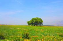 哈素海是黄河变迁而遗留的牛轭湖,属大黑河水系的外流淡水湖泊。过去曾称陶思浩西海子,俗称后泊儿。哈素海