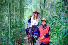 说起来诸暨之行最有意思的体验则是在马剑镇秦皇古道骑马了,之所以叫做秦皇古道可不是空穴来风,据《越