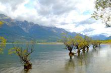 如果说wanaka那棵树是湖中一枝独秀,那么格林诺奇这一排就是百花齐放了。格林诺奇是皇后镇水上探险的
