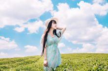 遵义必游小众景点|中国茶海之乡湄潭茶海  说到去贵州旅行大部分人能想到的都是黄果树瀑布、千户苗寨等热